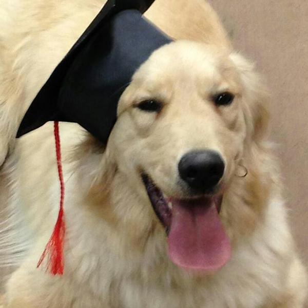 dog with graduation hat